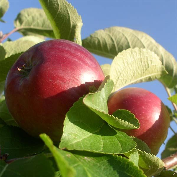 Pre zdravý rast plodín v záhradách..