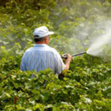 Postreky, pesticídy