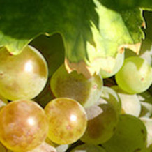 Vinohradnícke, vinárske a záhradkárske potreby