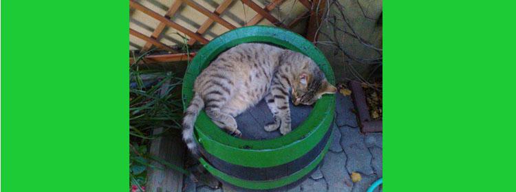 veľký široký mačička Filipíny porno trubice