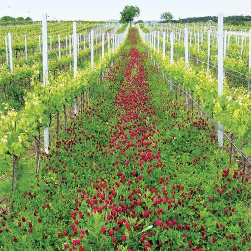 Rebenfit 0,5kg- zmes na ozeleňovanie vinohradov